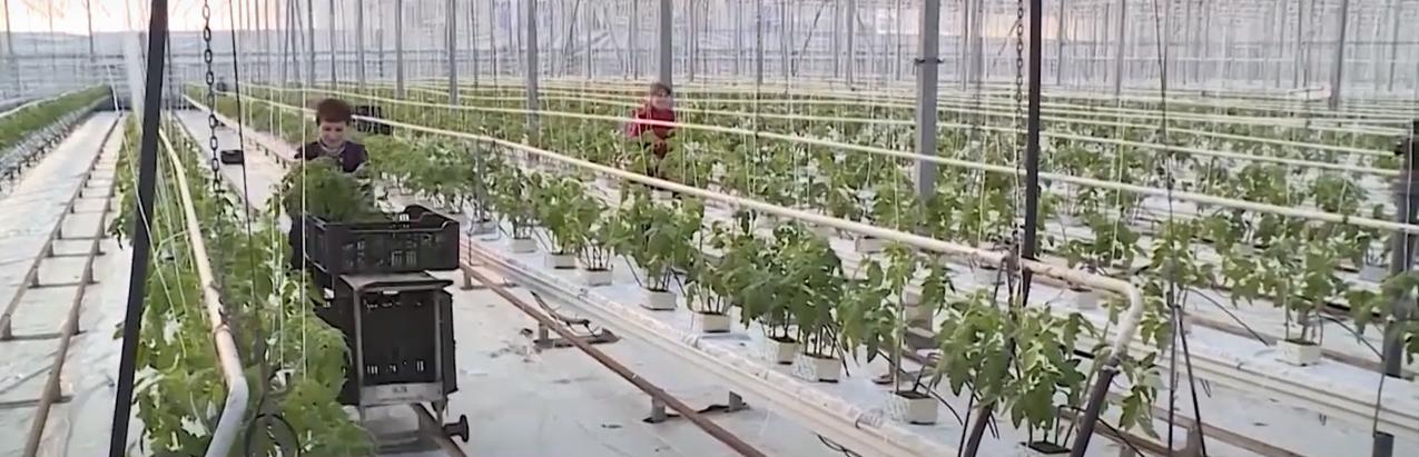 Новый овощной сезон
