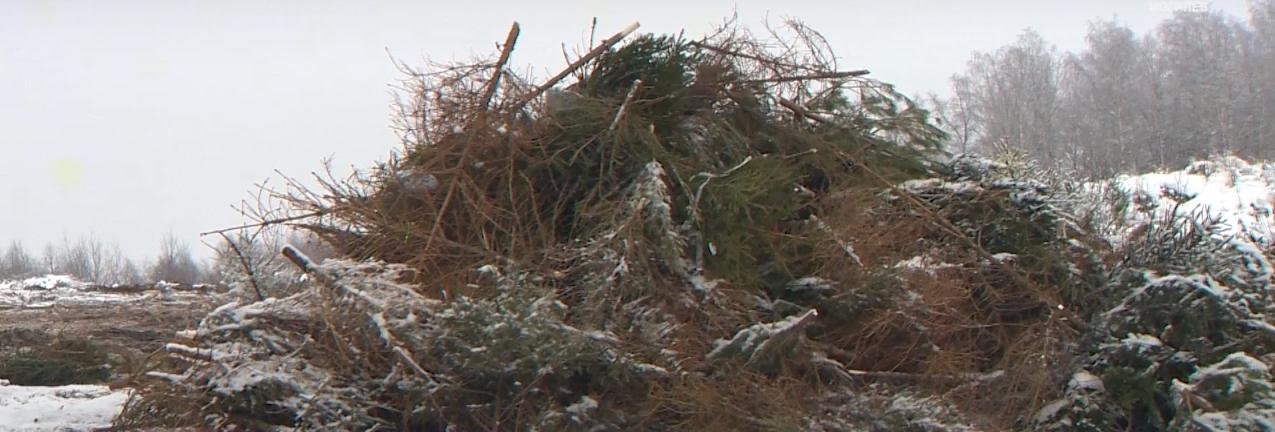 Правильно убрать елки